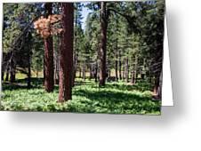 Bluff Lake Ca Fern Forest 2 Greeting Card