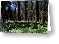 Bluff Lake Ca Fern Forest 4 Greeting Card