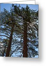 Bluff Lake Ca Through The Trees 3 Greeting Card