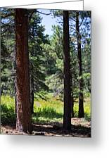 Bluff Lake Ca Through The Trees 7 Greeting Card