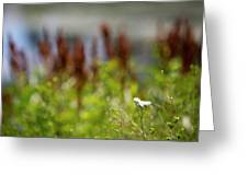 Bluff Lake Ca Wild Flowers 1 Greeting Card