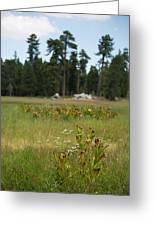 Bluff Lake Ca Wild Flowers 4 Greeting Card
