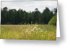 Bluff Lake Ca Wild Flowers 5 Greeting Card