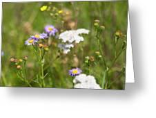 Bluff Lake Ca Wild Flowers 6 Greeting Card