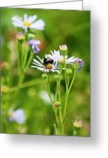 Bluff Lake Ca Wild Flowers 8 Greeting Card