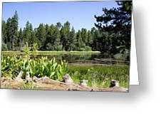 Bluff Lake Foliage 5 Greeting Card