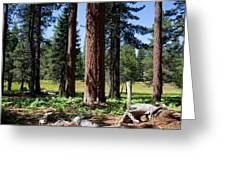 Bluff Lake Forest 3 Greeting Card