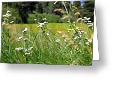 Bluff Lake Wild Flowers 1 Greeting Card