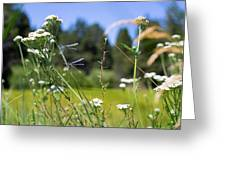 Bluff Lake Wild Flowers 2 Greeting Card
