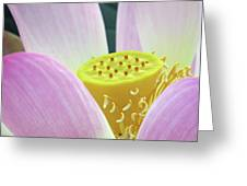 Blumen Des Wassers - Flowers Of The Water 06 Greeting Card