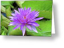 Blumen Des Wassers - Flowers Of The Water 17 Greeting Card