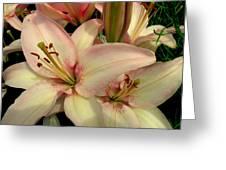 Blush Greeting Card