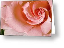 Blush Pink Rose Greeting Card