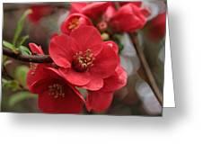 Blushing Blooms Greeting Card