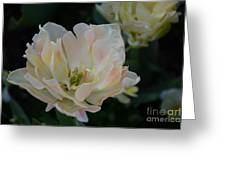 Blushing Greeting Card
