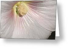 Blushing Hollyhock Greeting Card