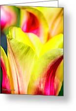 Blushing Lady Tulips Greeting Card