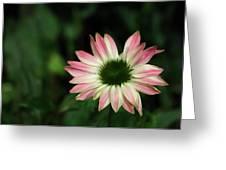 Blushing Tips Greeting Card