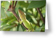 Blusing Lizard Greeting Card