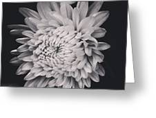 Bnw Flora Greeting Card