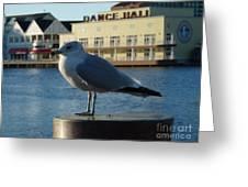 Boardwalk Seagull Greeting Card