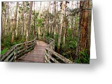 Boardwalk Through Corkscrew Swamp Greeting Card