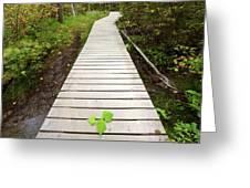 Boardwalk To Backguard Falls In British Columbia Greeting Card