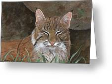 Bob Cat Greeting Card