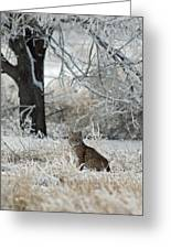 Bobcat And Heavy Frost Greeting Card