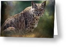 Bobcat Gaze Greeting Card