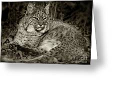 Bobcat In Black And White Greeting Card