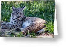 Bobcat In The Grass 2 Greeting Card