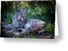 Bobcat In The Grass Greeting Card