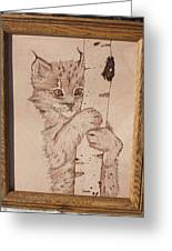Bobcat Kitten Curiosity Greeting Card