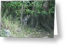 Bobcat In The Everglades Greeting Card