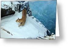 Bobcat On A Mountain Ledge Greeting Card