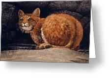 Bobcat On Ledge Greeting Card