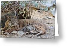 Bobcat Resting Greeting Card