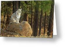 Bobcat Thoughts Greeting Card