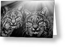 Bobcats Greeting Card
