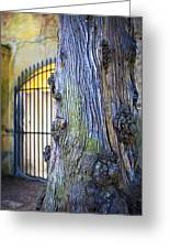 Boboli Garden Ancient Tree Greeting Card