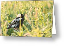 Bobolink Greeting Card
