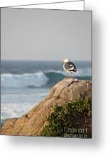 California Gull 2 - Bodega Head Sentinel  Greeting Card