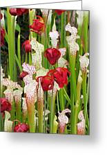 Bog In Bloom Greeting Card