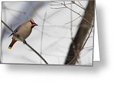 Bohemian Waxwing 2 Greeting Card