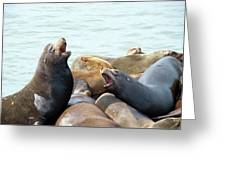 Boisterous Pinnipeds Greeting Card