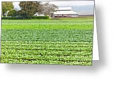 Bok Choy Field And Farm Greeting Card
