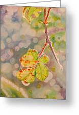 Bokeh - Sunlight On Brambles And Cobwebs Greeting Card