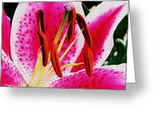 Bold And Beautiful Greeting Card