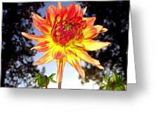 Bold And Beautiful Greeting Card
